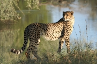 African Safari at Mohlabetsi Lodge with Alba Weinman